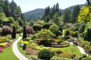Linie a tvary v zahradě