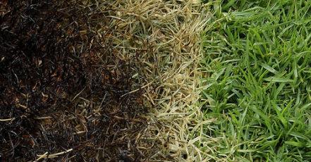 Na vypalování trávy pozor