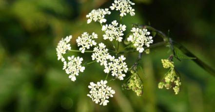 Jaké léčivky pořídit na zahradu