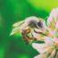 Krásná zahrada v pěti krocích aneb co byste s příchodem jara neměli opomenout