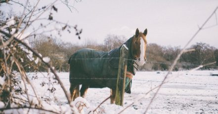Jak se starat o koně, který žije přes zimu venku?