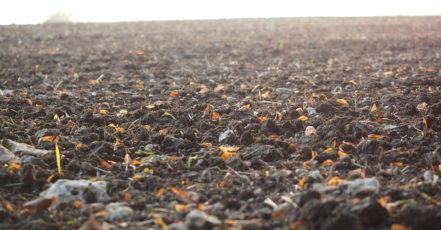 Jak na měření a upravování pH půdy