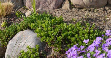 Jaké kameny na zahradu
