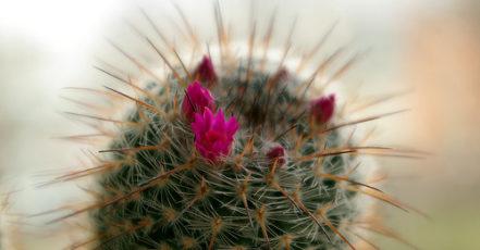 Jak správně pečovat o kaktusy