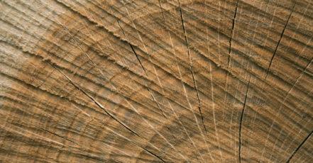 Dřevo do našich interiérů rozhodně patří