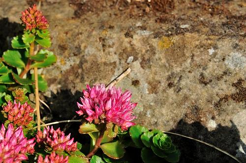 Oživte svoji zahradu skalkou