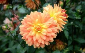 Užitečnost pokojových rostlin