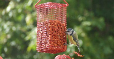 Pítka a krmítka: Jak přitáhnout ptáky?