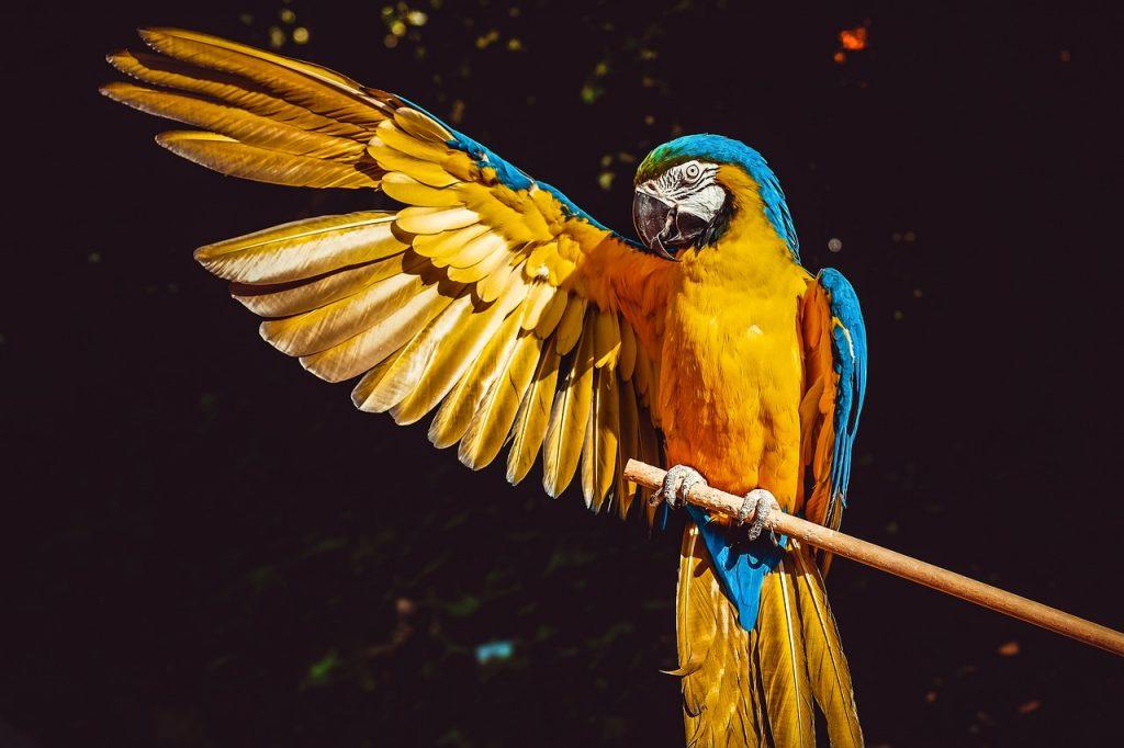 I zahradní voliéry pro exotické ptactvo je možné sestavit rychle a snadno. Doslova jako stavebnici